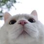 富貴招財貓