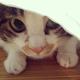 創作者 貓小二 的頭像