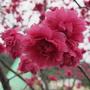 flora3557
