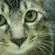 創作者 布貓 的頭像