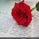 創作者 玫瑰小丸子 的頭像