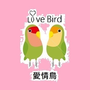 愛情鳥未婚聯誼
