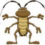 蟑螂藥diy
