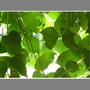 leavescat