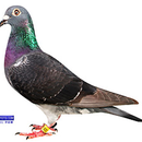 展翅高飛-阿志 圖像