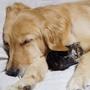 Cat loves Dog♥