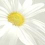 艾莉安.花花