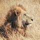 創作者 みずがめノ獅子 的頭像