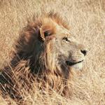 みずがめノ獅子