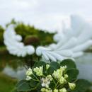 堤緣花語陶 圖像