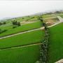 vincehuang15