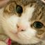 大頭貓幸福雜貨